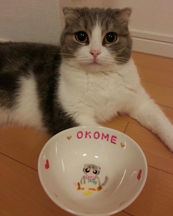 オーダー猫用食器全身 OKOME