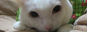 【まいにち猫日和】